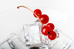 Red currant berries in a martini glass on white background. Tone Stock Photography