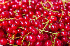 Red currant berries. Natural background Royalty Free Stock Photography