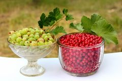 Red currant berries Ribes Rubrum and gooseberries Ribes uva-crispa in glass bowls.  stock photos