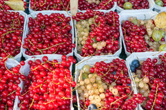 Red currant berries for sale at a market Stock Images
