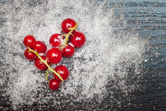 Red currant berries sprinkled with sugar Royalty Free Stock Photo