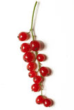 Red currant berries. String or raceme of red currant berries, isolated against white background Stock Photo