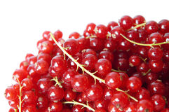 Red Currant berries on a white background Royalty Free Stock Photo