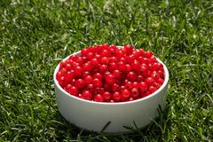 Red currant berries on a white plate in green grass. Description: red currant berries on a white plate in green grass, background, berry, bowl, branch, bunch stock photography