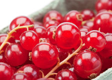 Red currant berry. Closeup view in box royalty free stock image