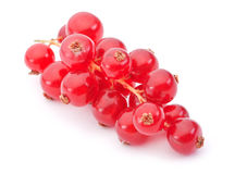 Red currant berry. Closeup on white background royalty free stock image