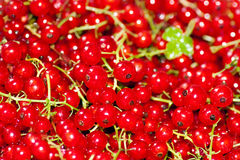 Red currant berry Royalty Free Stock Images