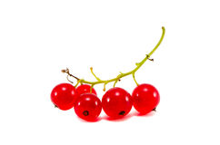 Red currant berry cluster isolated on white Royalty Free Stock Images