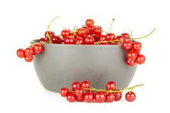 Fresh raw red currant berry isolated on white. Red currant berry in a grey ceramic bowl one string is near it isolated on white stock photos