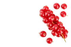 Red currant berry isolated on white background with copy space for your text. Top view. Flat lay pattern.  royalty free illustration