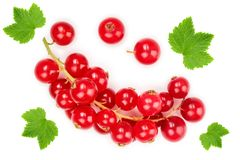 Red currant berry isolated on white background. Top view. Flat lay pattern.  royalty free stock photography
