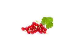 Red currant berry isolated on white. A bunch of red currant. Stock Photo