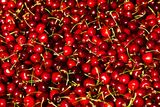 Red currant berry Stock Photography