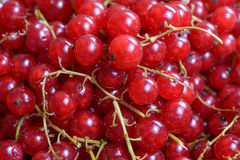 Red currant berry Stock Photo
