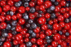Red currant and bilberry Royalty Free Stock Image