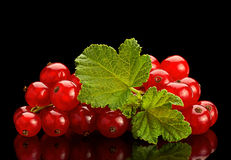 Red currant on black background Stock Photos