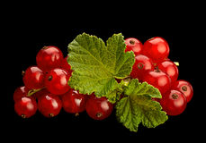 Red currant on black background Royalty Free Stock Photography