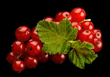 Red currant on black background Royalty Free Stock Photos