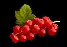 Red currant on black background Stock Images