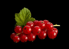 Red currant on black background Stock Photography
