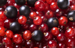 Red currant and black currant backgroung Stock Photography