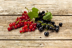 Red currant and black currant fruits Stock Photos
