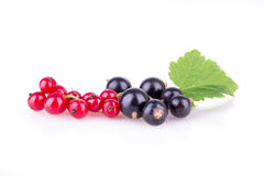 Red currant and black currant on a white background Royalty Free Stock Images