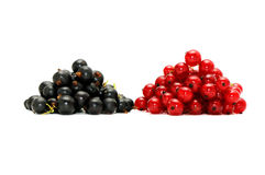 Red currant and  blackcurrant Stock Photo