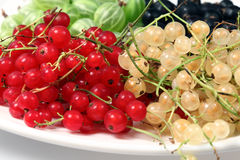 Red currant, blackcurrant and gooseberries Royalty Free Stock Photography