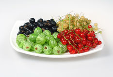 Red currant, blackcurrant and gooseberries Royalty Free Stock Images