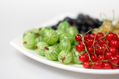 Red currant , blackcurrant and gooseberries Stock Image