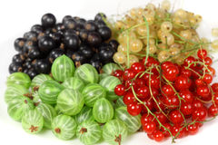 Red currant, blackcurrant and gooseberries Royalty Free Stock Image
