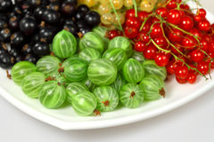 Red currant, blackcurrant and gooseberries Royalty Free Stock Photo