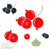 Red currant. Blackcurrant Stock Images