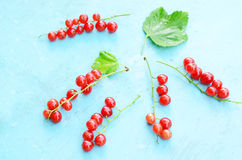 Red currant on blue background Stock Photography