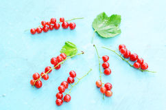 Red currant on blue background Royalty Free Stock Photo