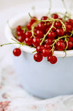 Red currant in the blue bowl Royalty Free Stock Photo