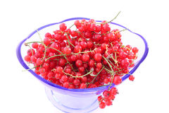 Red Currant in blue glass bowl Royalty Free Stock Photo