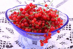 Red Currant in blue glass bowl Stock Image