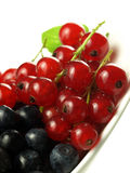 Red currant with blueberries Stock Photos