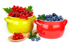 Red currant and blueberry Stock Images