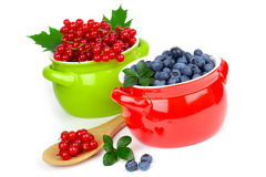 Red currant and blueberry, Stock Photo