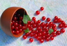 Red Currant And The Bowl On The Towel. Red currant and the ceramic bowl on the dish towel Royalty Free Stock Photos