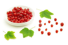 Red currant and bowl Stock Image
