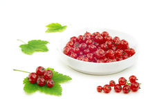 Red currant and bowl Royalty Free Stock Photo