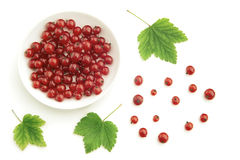 Red currant and bowl Stock Photography