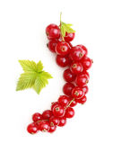 Red currant branch isolated Stock Photo
