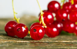 Red currant. Royalty Free Stock Photography