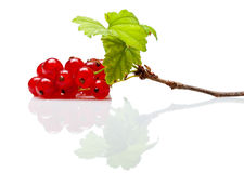 Red currant branch on white reflective plane Royalty Free Stock Images