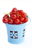 Red currant in bucket Stock Image